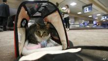 New Rule in USA to Allow Passengers to Bring Pet Animals on Flight
